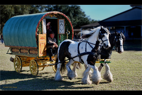 horse museum wagon carriage florida gypsy vanner gypsyvanner