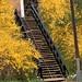 spring garden steps