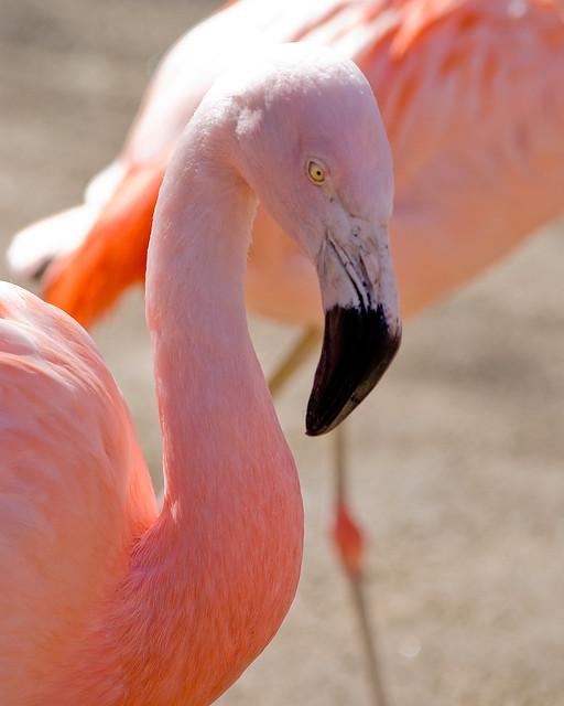 Roger Williams Park: Flamingos At Roger Williams Park Zoo