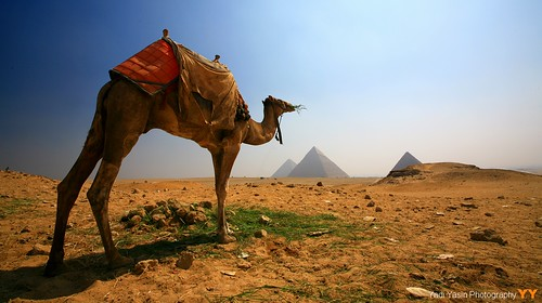 desert pyramid egypt 100v10f cairo camel breathtaking smörgåsbord ineffable cotcmostfavorited 5photosaday a photographyrocks gyza platinumphoto aplusphoto flickrdiamond goldstaraward worldtrekker landscapesofvillagesandfields breathtakinggoldaward paololivornosfriends top20travelpix qualitysurroundings yadiyasin yadiyasinfotografernet