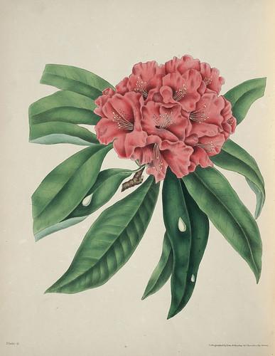 Odisea2008 el significado po tico de las flores - Rododendro arbol ...