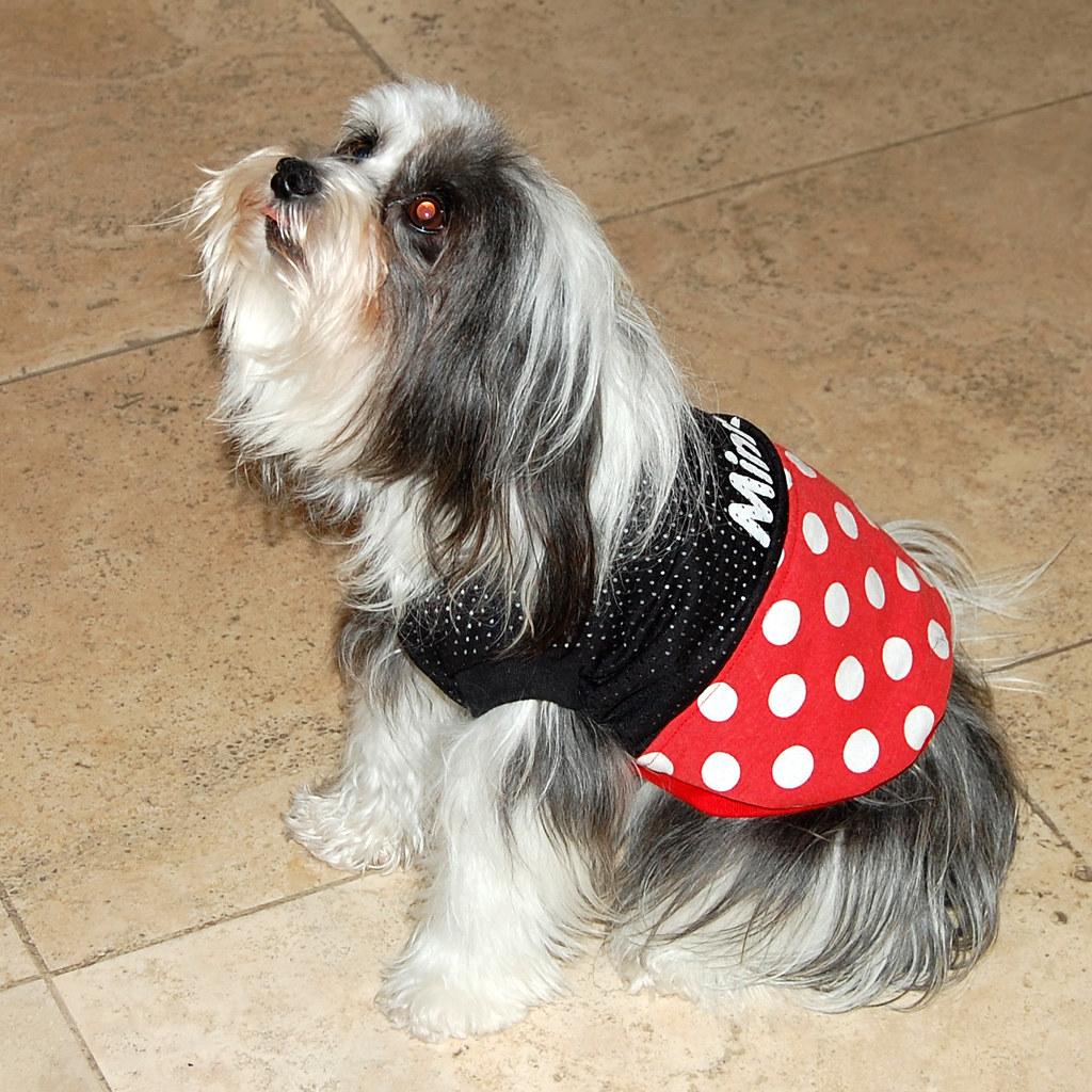 Nancy Dog Grooming Abbotsford