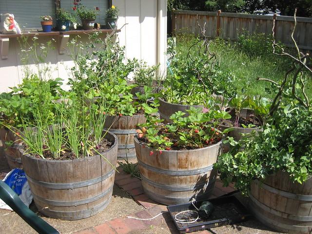 3632928079 74c5da537e - Soil for container vegetable gardening ...