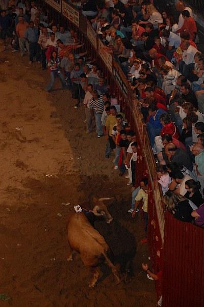 Coria. Fiestas de San Juan 2009. Toro día 24 Madrugada. Ricacho (Ganadería: Urcola)