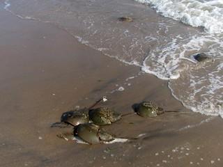 Obrázek Plumb Beach u Kings County. nyc newyorkcity ny newyork beach brooklyn waterfront seashore picnik seacoast sheepsheadbay horseshoecrabs atlanticcoast raritanbay plumbbeach