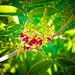 edited flower by Rebex93