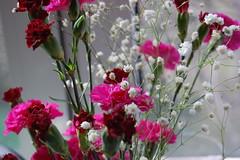 carnation, annual plant, flower arranging, cut flowers, flower, floral design, herb, flora, flower bouquet, floristry, pink,