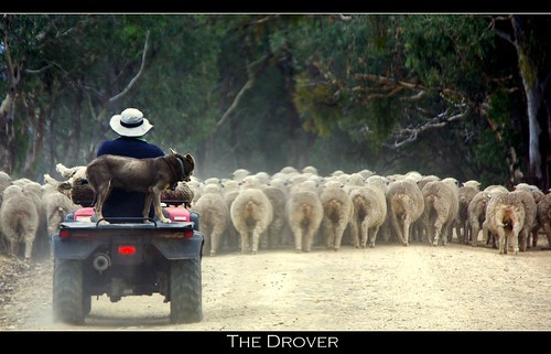 Droving the Mob