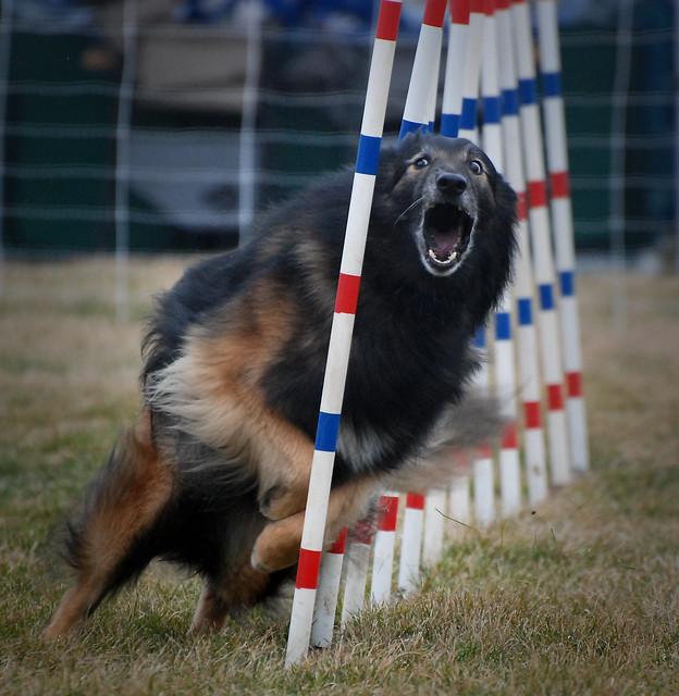 Woof Dog Training Lincoln