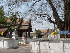 temple tree2