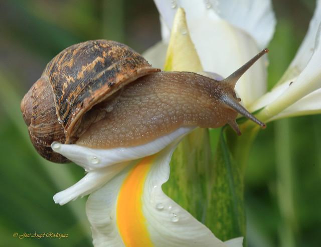 Un caracol en mi jard n 2 a snail in my garden 2 a for Caracoles de jardin