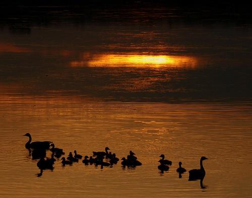 sunset ontario canada water olympus goose f e3 soe southshore haybay bayofquinte southshorerd mondocafeclub geamilyese