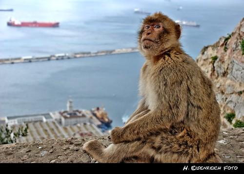 rock prime monkey photo ic foto fotografie hans award heike ape gibraltar landschaft reise 2010 affe reisefotografie berberaffe landschaftsfotografie schmidmühlen eisenreich reisefoto flickrtravelaward eijomian landschftsfoto