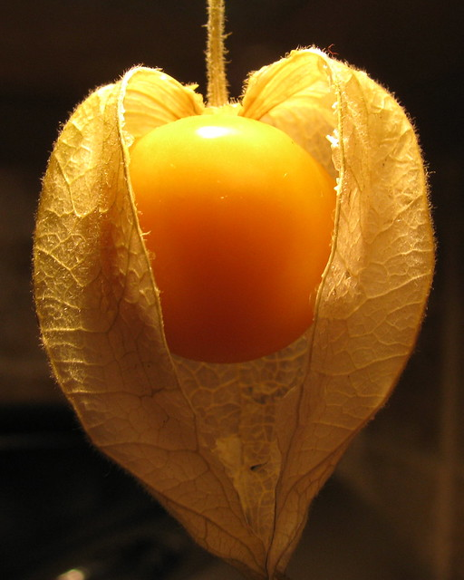 Cape Gooseberry Flickr Photo Sharing