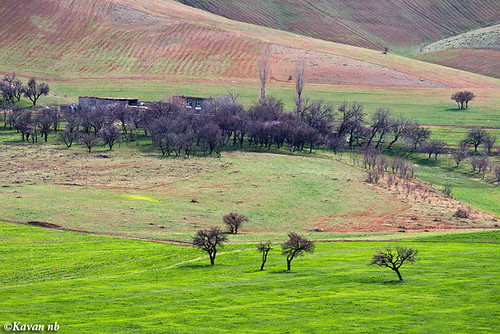 tree green grass canon landscape spring iran velvet iranian kurdistan sanandaj kavan kordestan 400d 70200lf4is