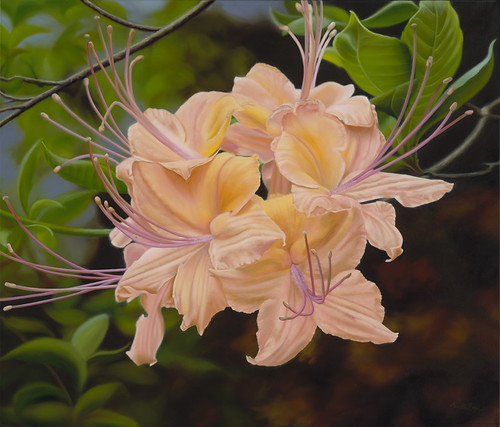 """Orange Azalea""- oil painting by Camille Engel"