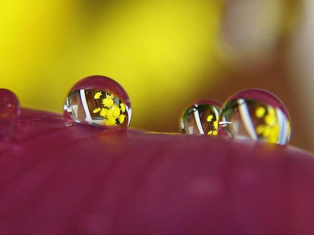 | صور رائعه على مقربه من قطرات المياه مناظر رائعه | 3424765367_7c4c481c3e_z.jpg?zz=1