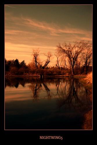 trees landscape reflexions flickraward