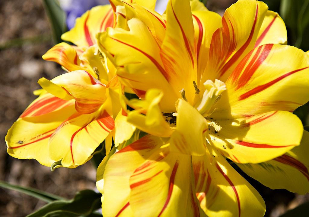 St Louis Botanical Garden Courtney Westlake Flickr