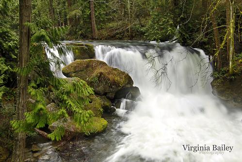 water creek march waterfall washington moss boulders evergreens pacificnorthwest bellingham wa cascade whatcomfalls whatcomfallspark whatcomcounty whatcomcreek canon50d virginiabaileyphotography