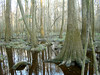 A Visit to the Congaree by lowcountrypen