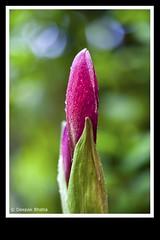Promises of bloom