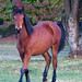 Domestic Horse - Photo (c) Patrick Keogh, some rights reserved (CC BY-NC-SA)