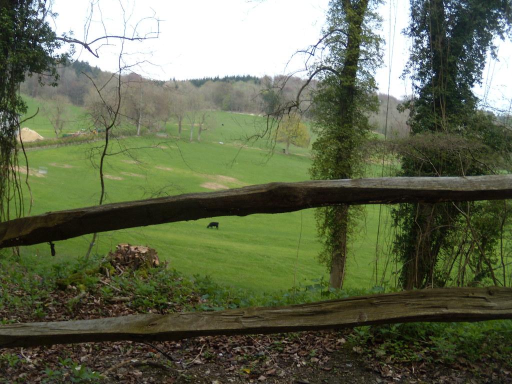 Colekitchen Farm Gomshall to Dorking