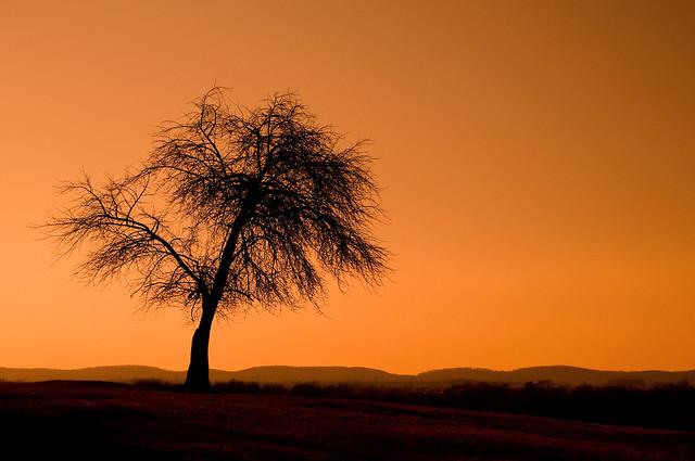 Monocacy Battlefield Tree 3-0 F LR 2-8-09 J024_edited-5