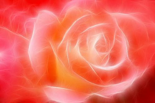 Rose Macro: Fractalius - IMG_8032-fra