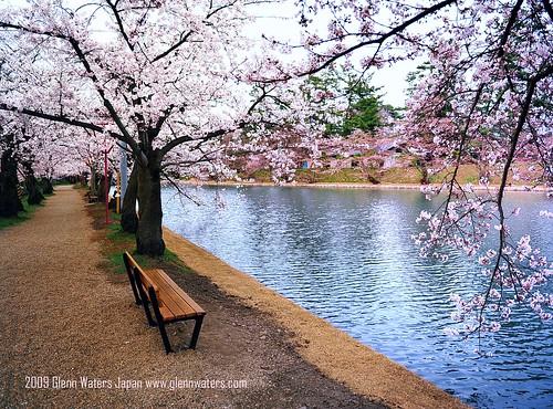 Sakura Sakura  (Hirosaki Japan). © Glenn Waters. (Explored).  Over 10,000 visits to this photo. Thank you.