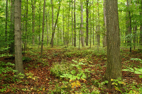 new york trees green church forest landscape site woods grove deep western sacred historical mormon lush lds palmyra hardwood wooded sacredgrove firstvision thesacredgrove thefirstvision