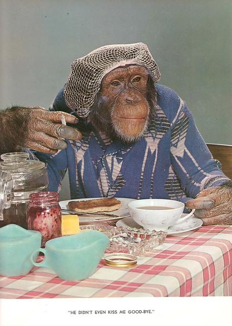 Chimp Chat Theda Hall, Emerson Hall