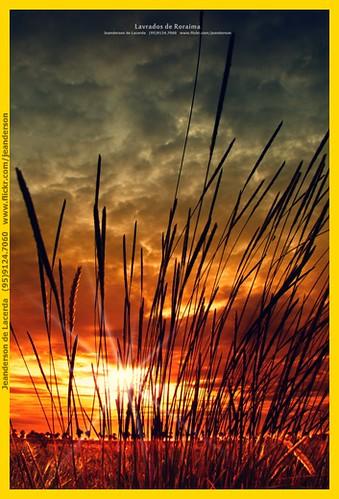sunset pordosol brazil sky sun macro green art sol nature brasil clouds sunrise contraluz landscape gold interestingness amazon natureza paisagem crepusculo manaus alvorada amazonas nationalgeographic roraima nascerdosol amazonia boavista alvorecer exposicao lavrado vejetação