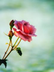 Beauty in Dark Pink