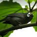 Little bird by WaterBugsPics