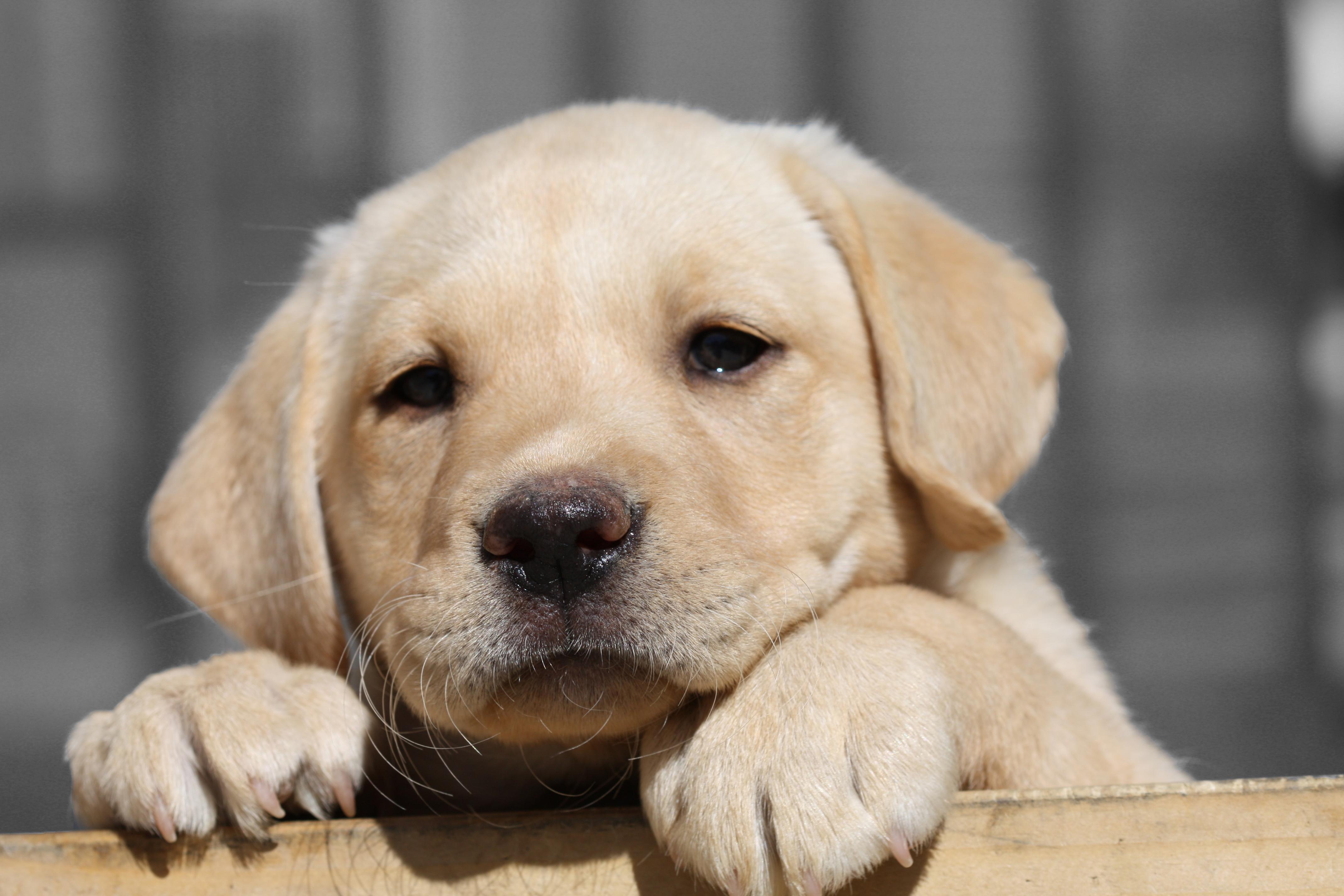 Puppies R Us Tennis Pig Dog Toy
