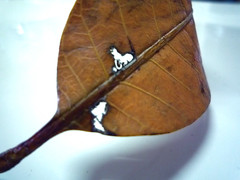 Dead Leaf - Acid
