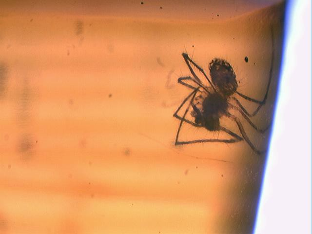 spider in amber | Flickr - Photo Sharing!: http://www.flickr.com/photos/kathy_/3388910862/