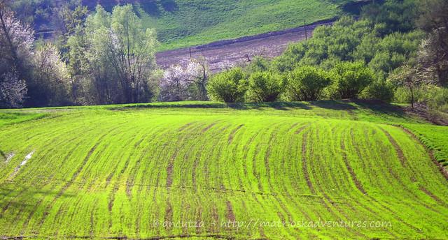 immagini colline verdi langhe Piemonte