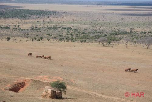 elephant game nikon kenya reserve safari tsavo 5photosaday d80