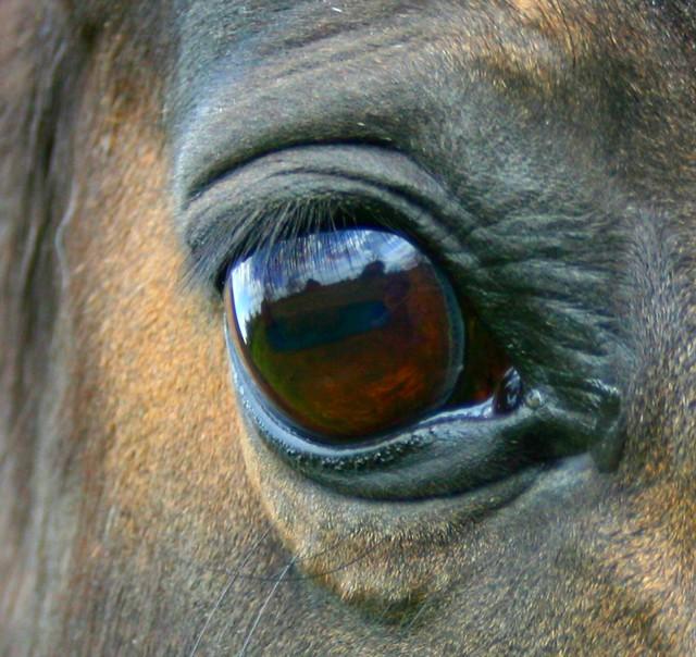Occhi specchio dell 39 anima eyes mirror of the soul a - Occhi specchio dell anima ...