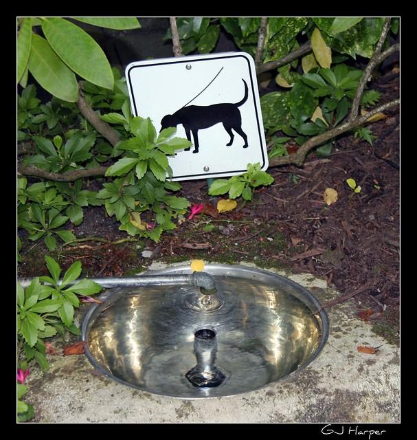 Image Result For Dog Waterer That