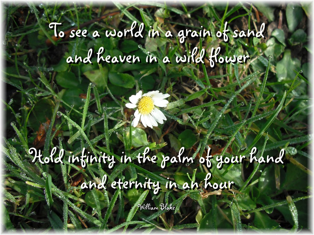 Spiritual quotes to live bys most interesting flickr photos picssr to see a world in a grain of sand and a heaven in a wild flower izmirmasajfo