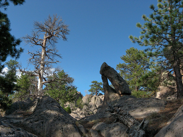 pine valley, rock and tree