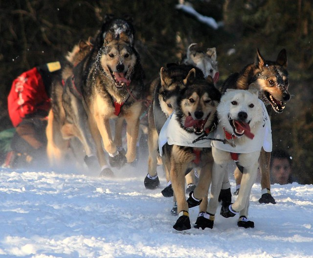 Shooting over the hill near Goose Lake at the ceremonial start of the 37th Iditarod sled dog race, Anchorage, Alaska