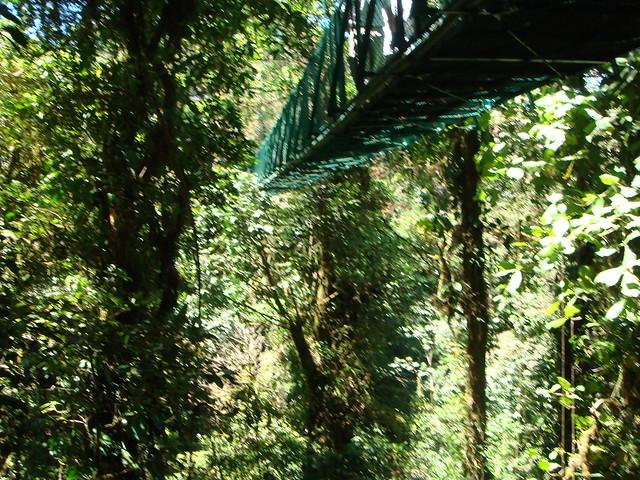 Monteverde Cloud Forest, Costa Rica | Flickr - Photo Sharing!: www.flickr.com/photos/kishrieves/3438791333