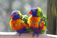 Vogelpark Marlow Ostern 2009