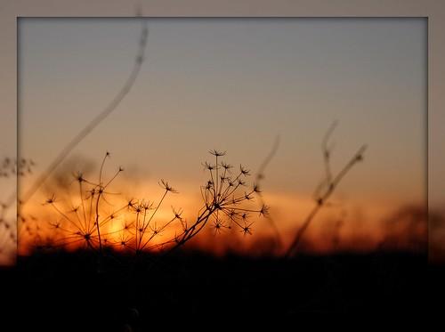 sunset silhouette golden indiana frame 2009 blueribbonwinner