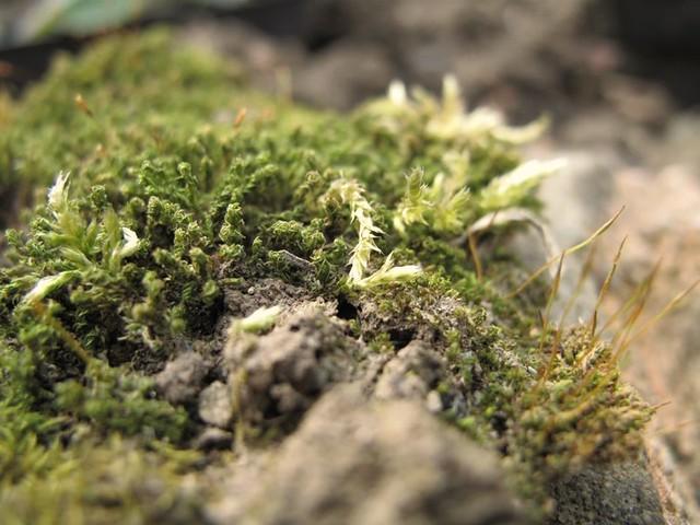 Mossy | Emma Lamb